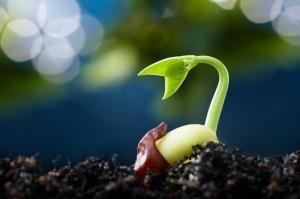 seedgrowth